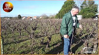 Approche...de la Viticulture : Visite dans le Pays du Muscadet : POURQUOI FAUT-IL TAILLER LES VIGNES EN HIVERS
